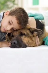 Wann muss der Schäferhund zum Tierarzt