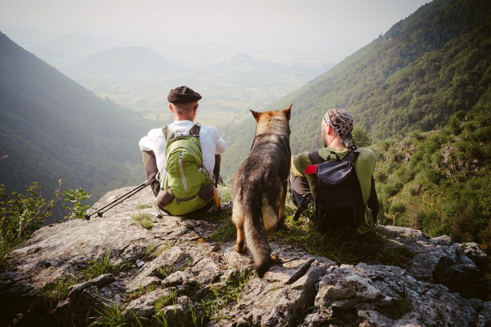 Schäferhund Urlaub