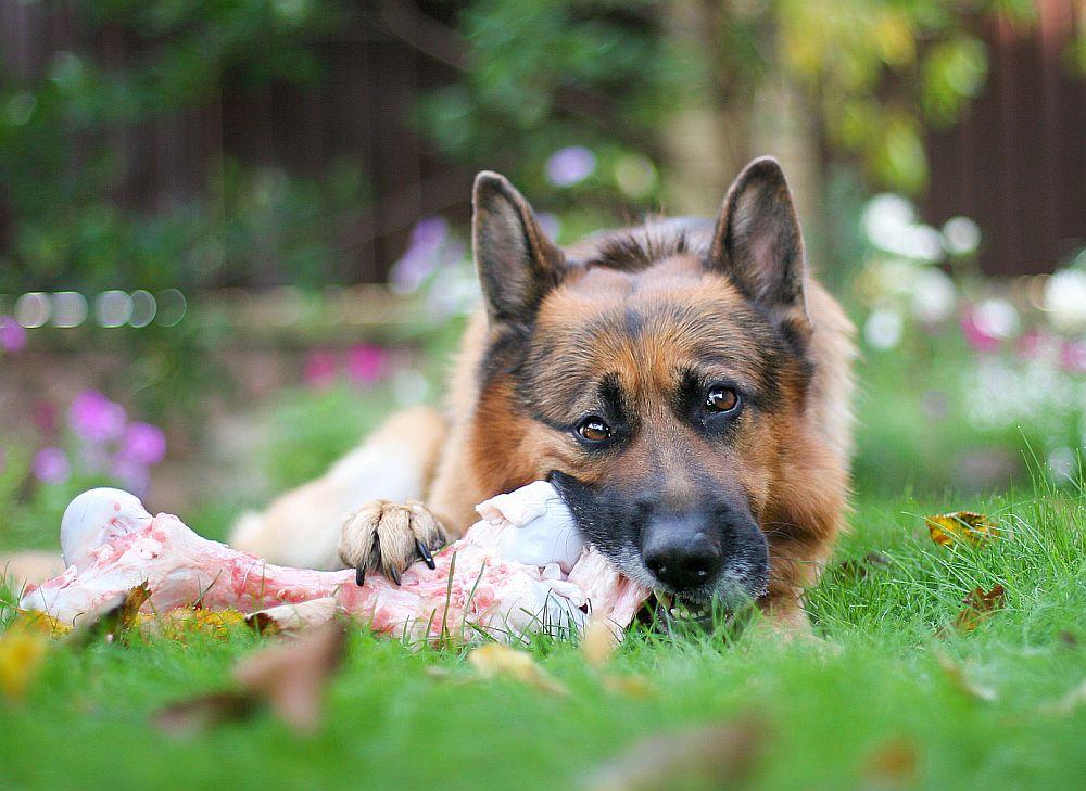 Gesundes Schäferhund Futter