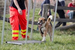 Rettungshunde Ausbildung