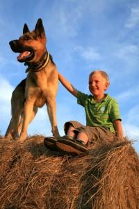 Schäferhund Kinderlieb
