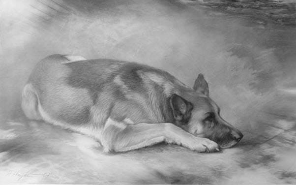 Zeichnung Schäferhund. Quelle: ARTLUX Galerie Thomas Lux