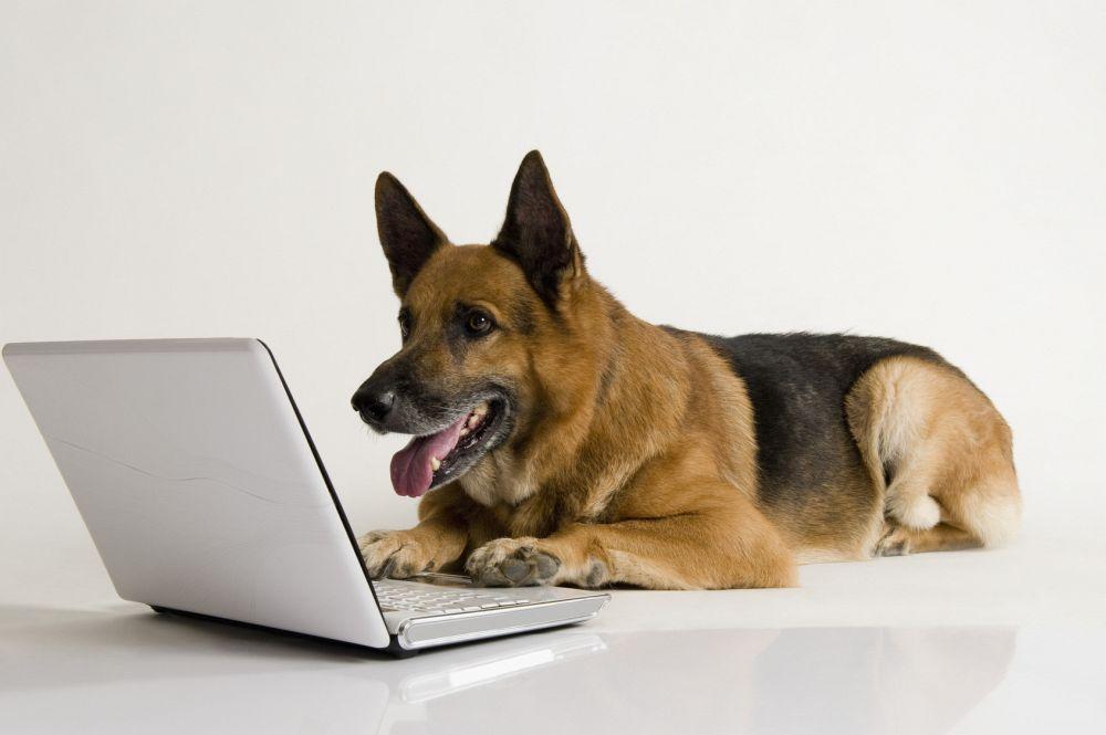 Hilfe aus dem Schäferhund Forum
