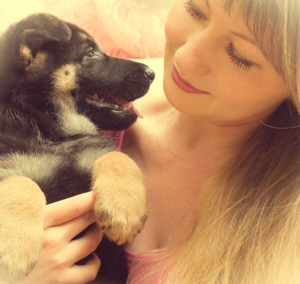 Lebenserwartung Schäferhund