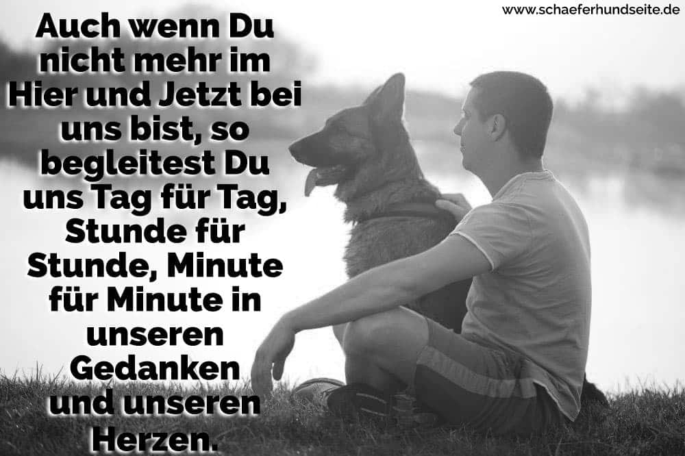 ein Mann und ein Schäferhund am Horizont