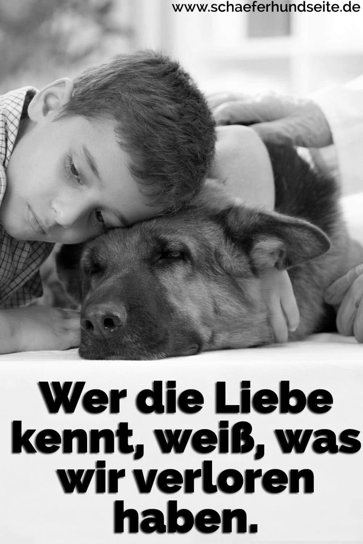 Einen Junge liegt am Boden mit seinen Schäferhund