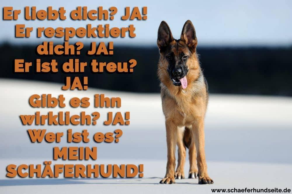 Schäferhund Zitate Und Sprüche
