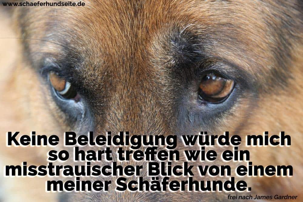 Schäferhund Augen