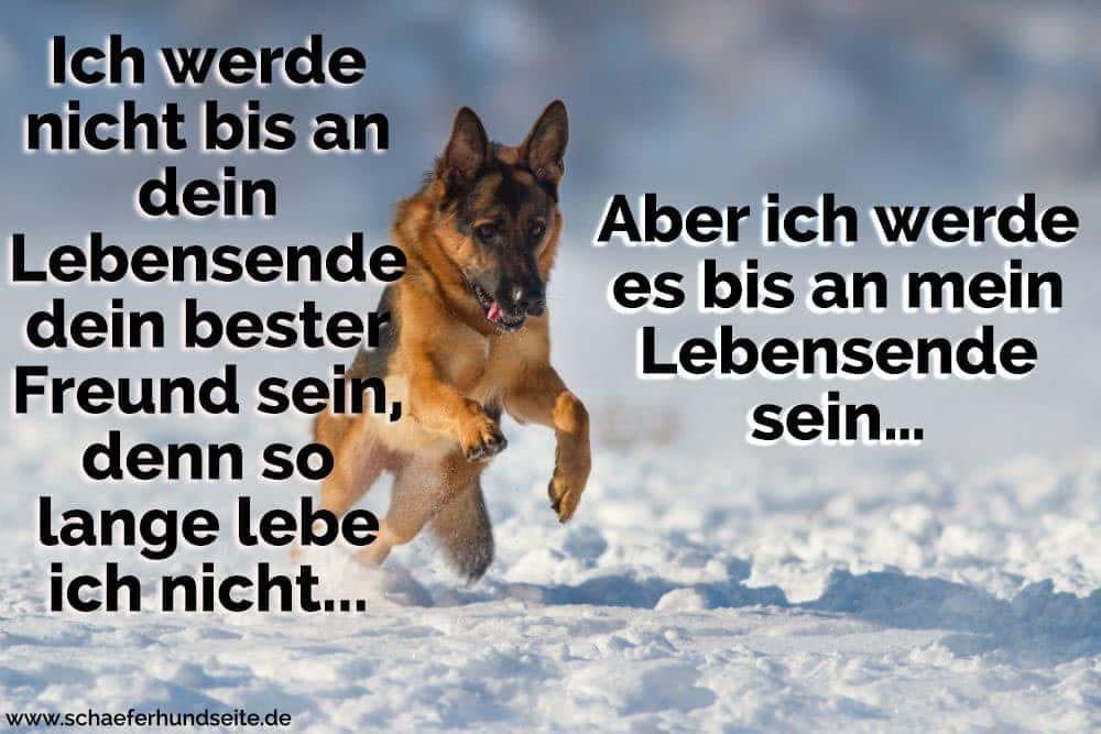Schäferhund im Schnee