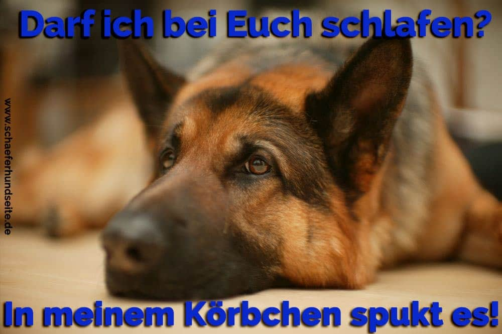Traurigen Schäferhund