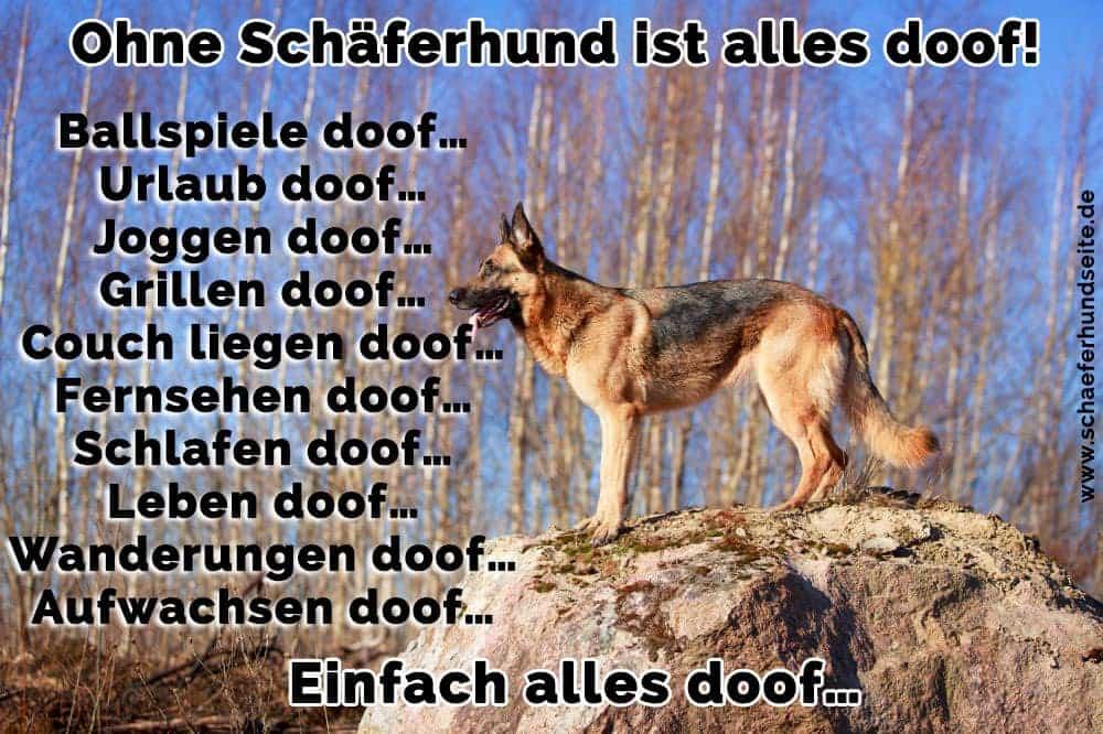 Schäferhund in Stein