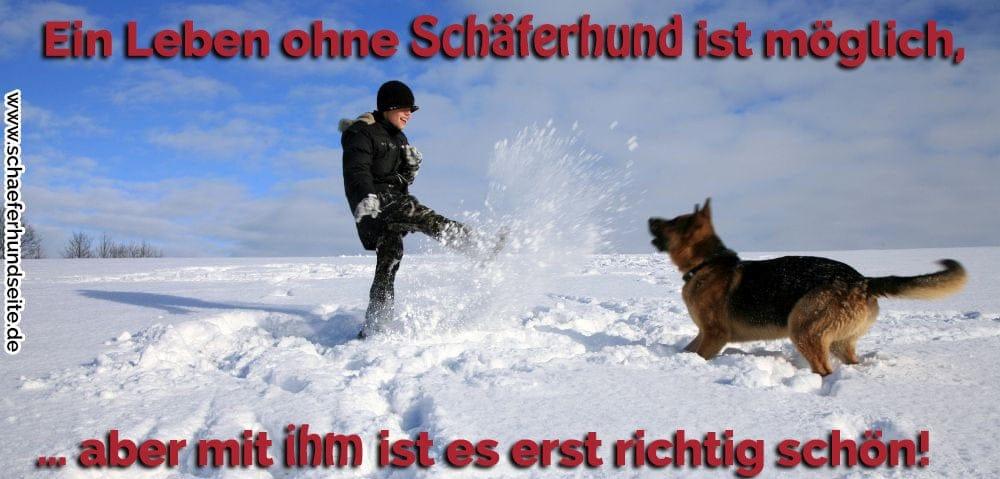 Junge spielt im Schnee mit seinen Schäferhund