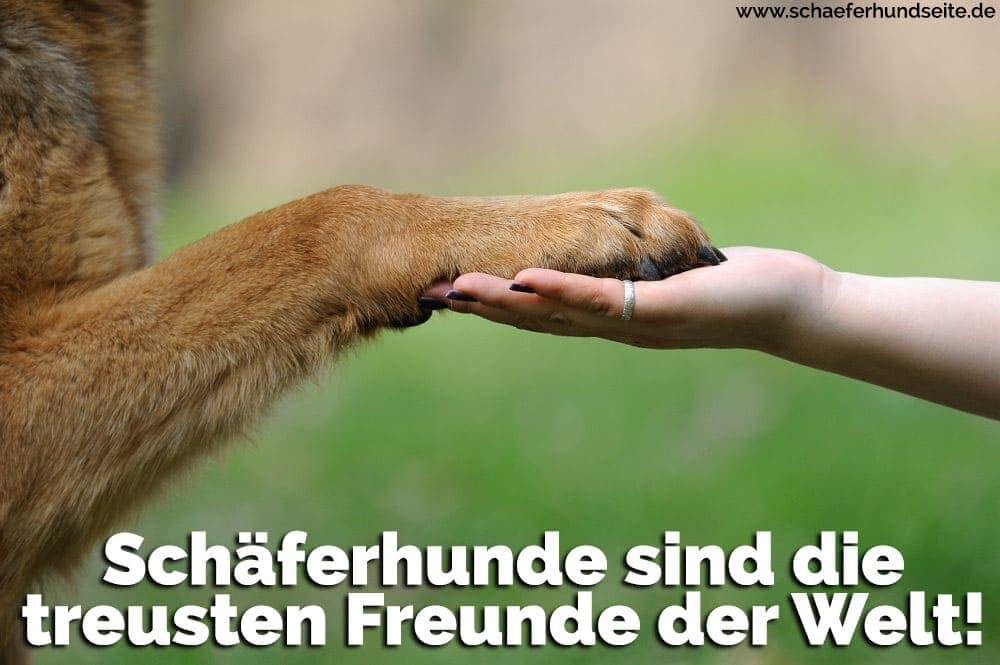 Hand hält eines Schäferhund Pfote