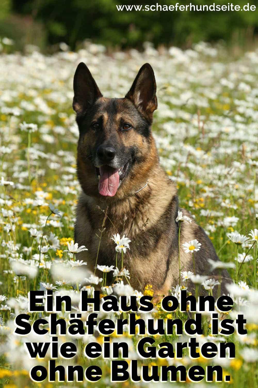 Schäferhund in den Blumen stehen