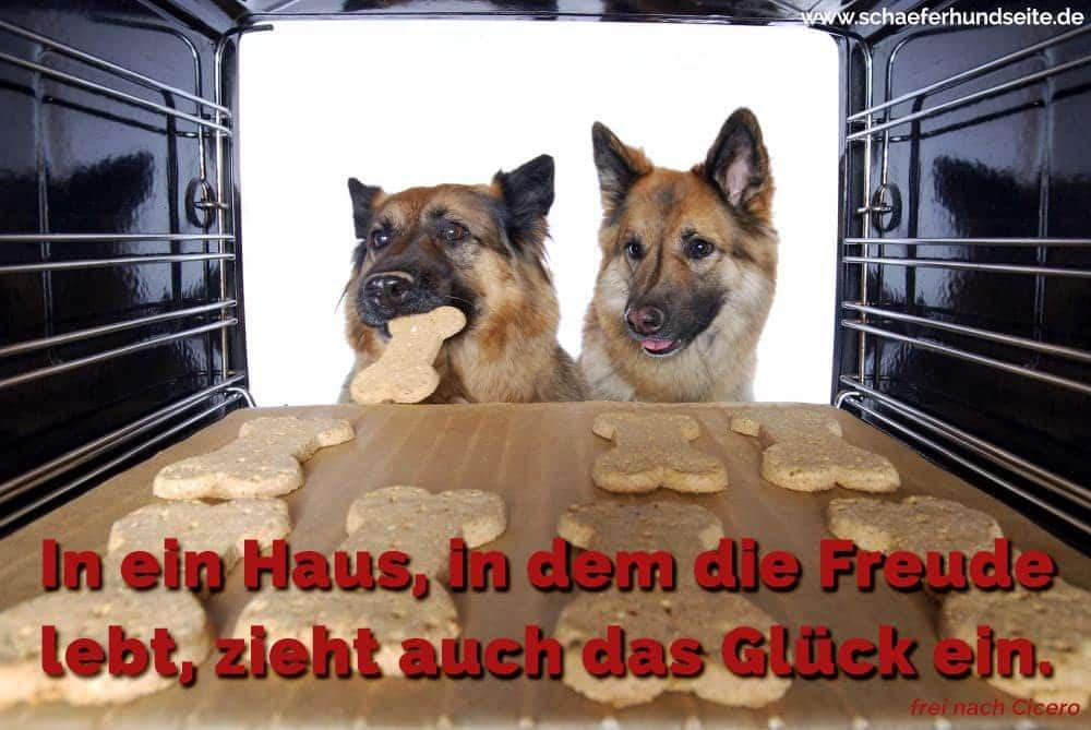 Kochen Schäferhunde