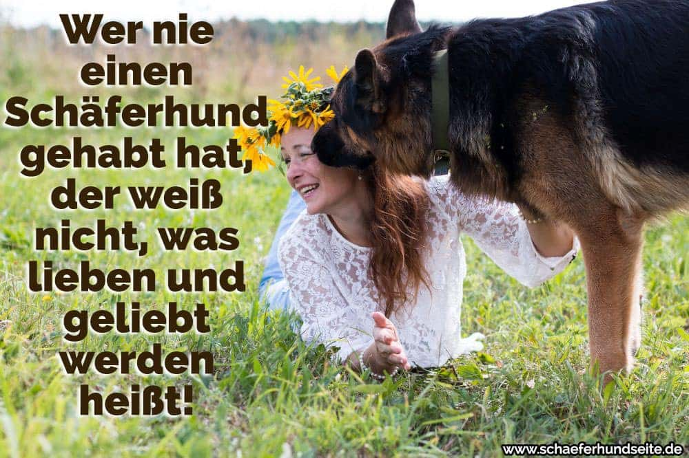 sch ferhund zitate und spr che. Black Bedroom Furniture Sets. Home Design Ideas