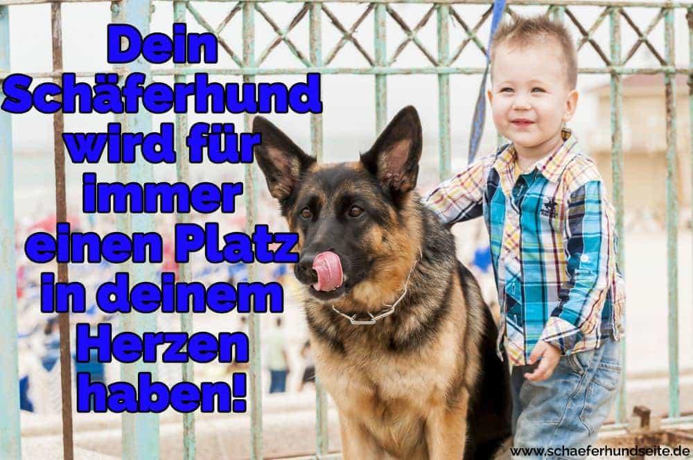 Der Junge unarmt ihren Schäferhund
