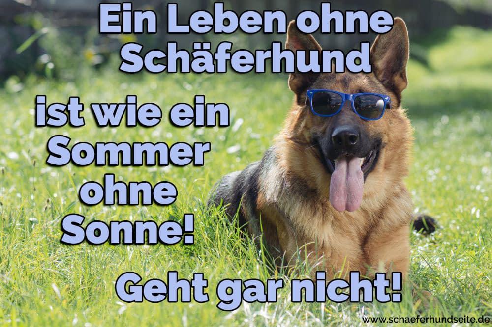 Einen Schäferhund trägt ein Brillen
