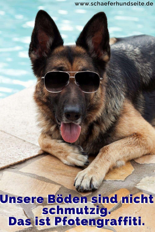 Einen Schärfhund trägt ein Brille